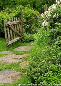 Schoeller-Cottage-Garden-stone-pathway-flower-gardens-rustic-fence-gate